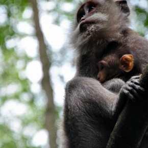 Животный Мир на Бали