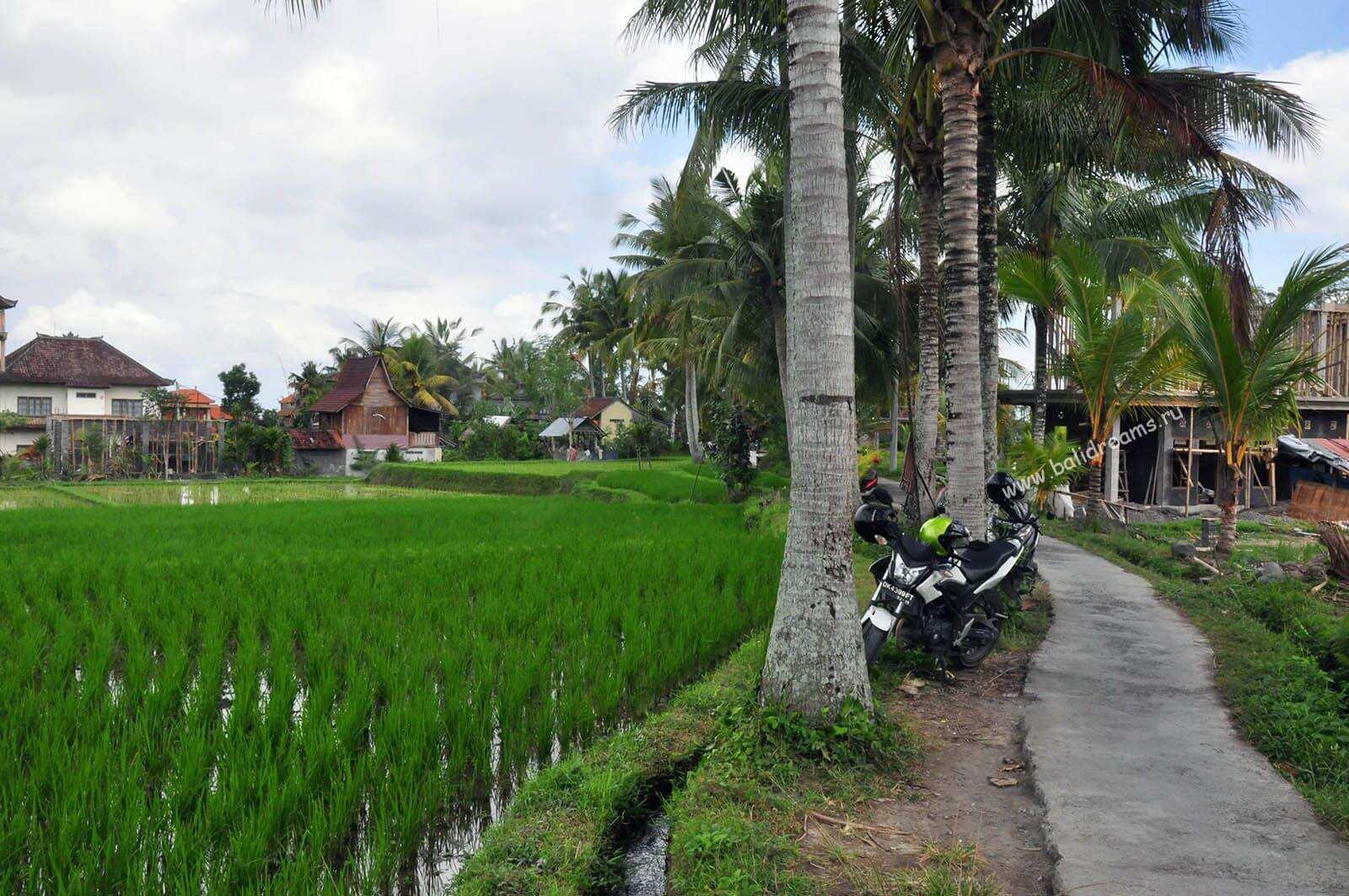 Узкие тропы среди рисовых террас в Убуде