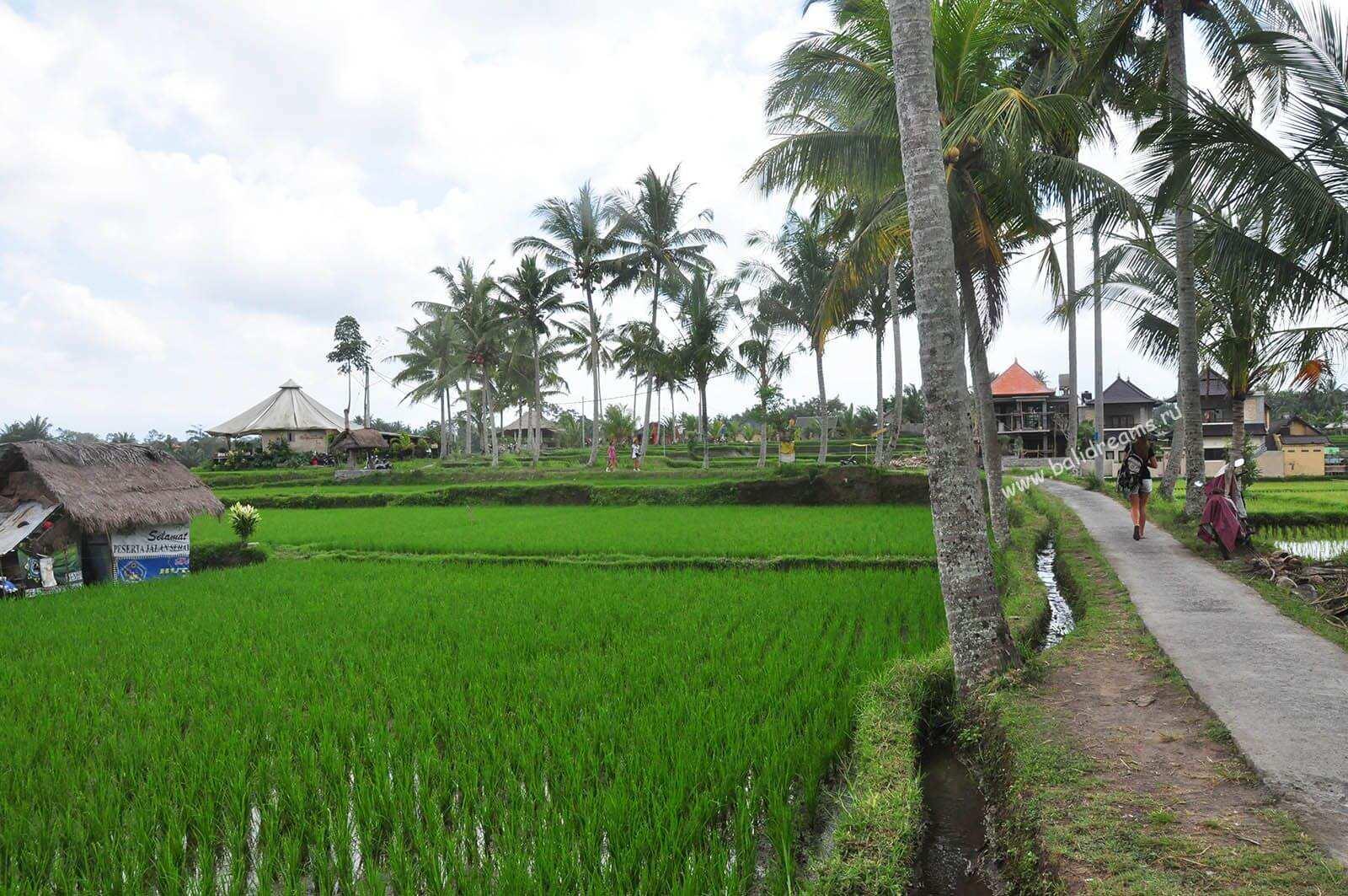 По рисовым террасам в сторону Сари органик