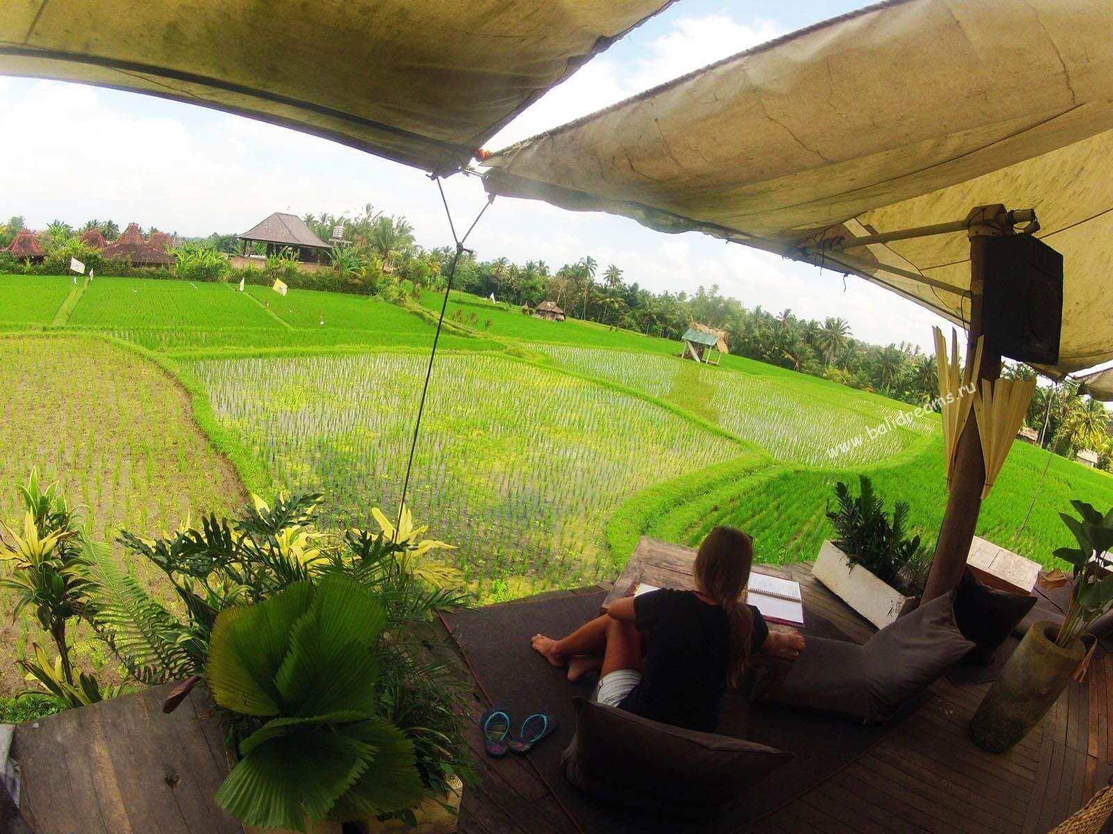 Обед среди рисовых террас в Убуде