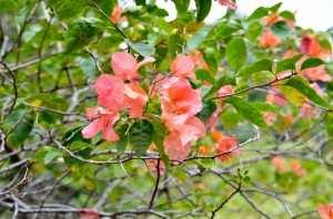 Цветы в Botanic Garden Сингапур