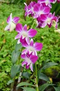 Различные виды орхидей в ботаническом саду Сингапура