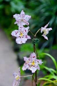 Редкие виды орхидей в национальном парке Сингапура
