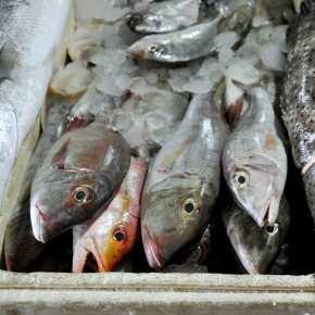 Рыбный рынок Джимбаран