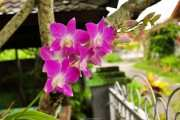 Орхидея в нашем саду