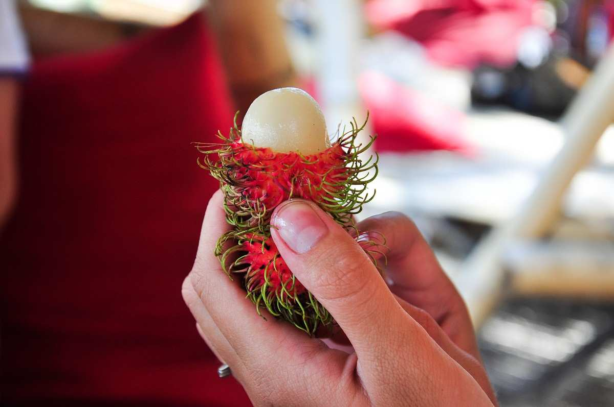 Рамбутан. Фрукты на Бали