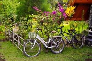 Велосипеды - популярный транспорт на Гили.