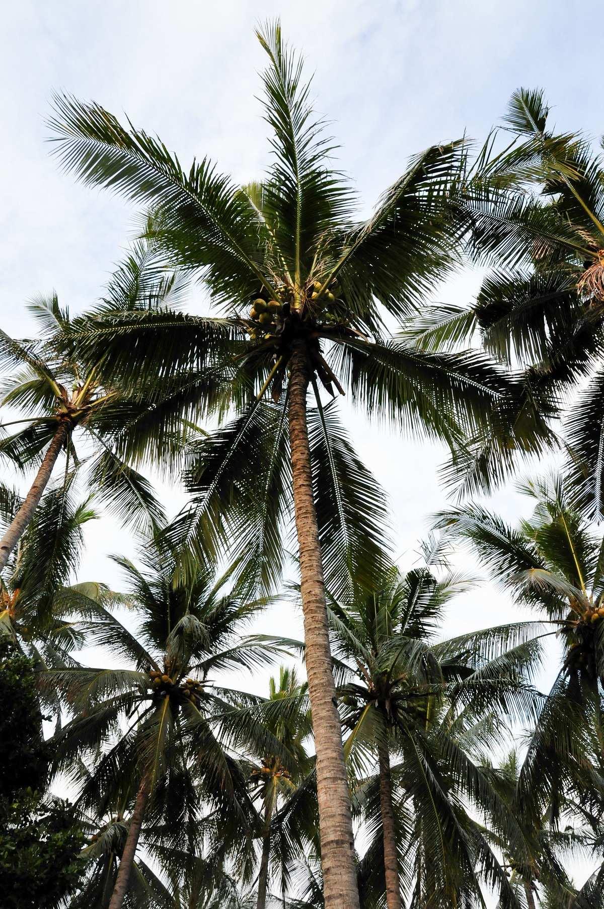 Природа на острове Гили Эир