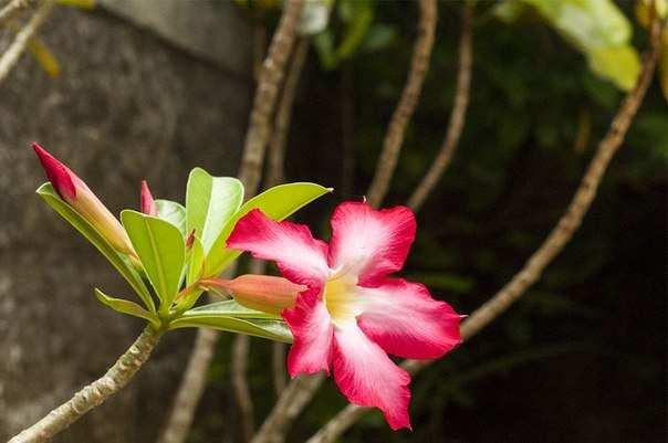 Цветы в саду. Бали