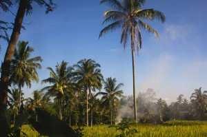 Природа острова Ява по дороге на Иджен