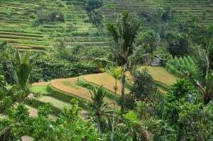 Домик на плантациях риса Бали
