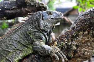 Зоопарк на острове Бали 2014-2015