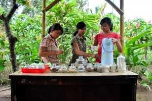 Дегустируем кофе лювак на плантациях для туристов