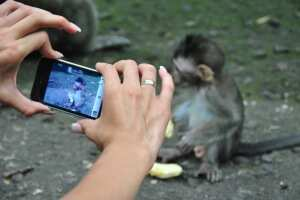 Лес обезьян, убуд
