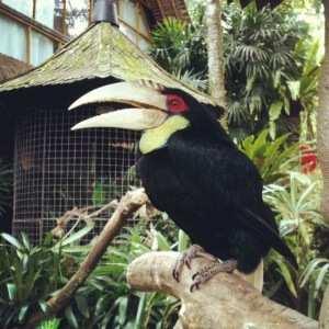 Экзотические птицы в музее Антонио Бланко Убуд