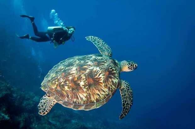 Снорклинг на островах Гили