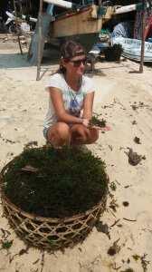 Продажа водорослей на острове Лембонган