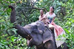 Прогулка на слонах. Индия, штат Гоа